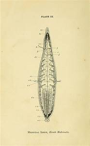 17 Best images about Phylum: Annelida on Pinterest ...