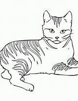 Coloring Cats Warrior Cat Pages Printable sketch template