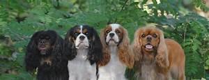 Genetic Diversity  U2013 Pets For Life
