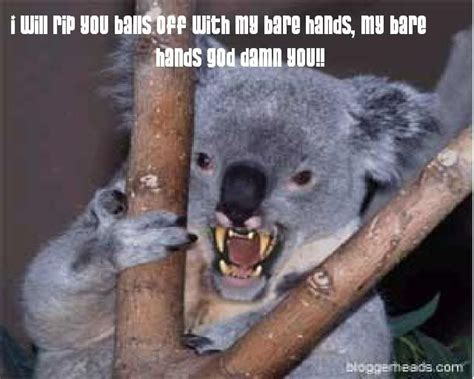 Koala Memes - evil koala meme google search funny stuff pinterest