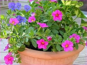 Jardiniere Fleurie Plein Soleil : quelle fleur pour jardiniere en plein soleil ~ Melissatoandfro.com Idées de Décoration