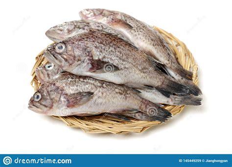 grouper fresh fishmonger delicious preview