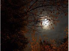 Superluna las fotos más espectaculares Conciencia Eco