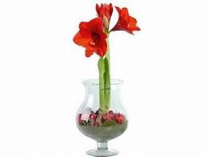 Amaryllis Im Glas : amaryllis in glas aanbieding week 49 2014 lidl ~ Eleganceandgraceweddings.com Haus und Dekorationen