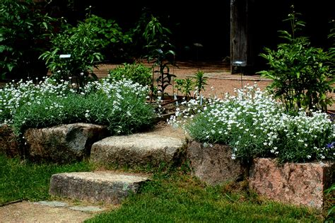 Perennials For Dry, Sunny Areas