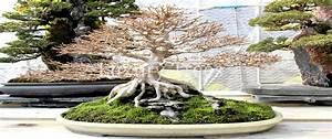 Die Schönsten Gartenbäume : bonsai pflegen luxurytrees sterreich ~ Michelbontemps.com Haus und Dekorationen
