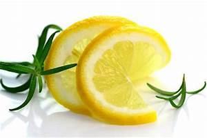Wie Lagert Man Zitronen : die zitrone ist ein unerl ssliches botanical ~ Buech-reservation.com Haus und Dekorationen