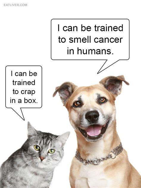 Cat Vs Dog Funny Quotes Quotesgram