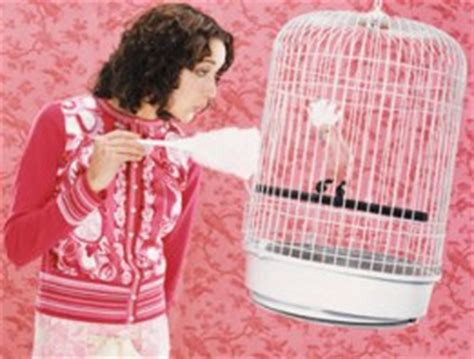 importance  bird cage cleaning  tips  clean