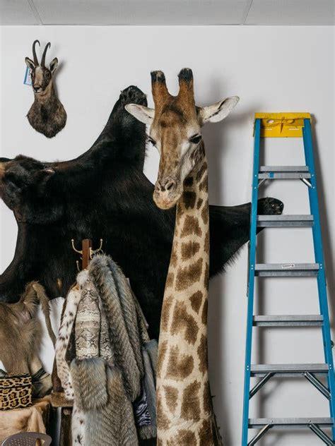 giraffe parts sales  booming