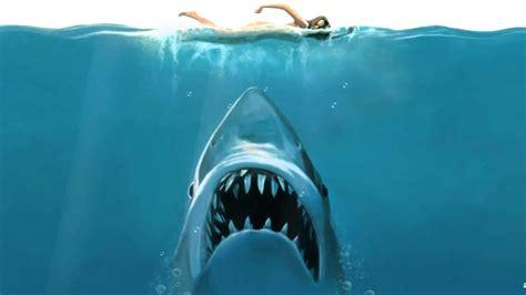 Shark Animated Wallpaper - shark attack animated wallpaper http www desktopanimated