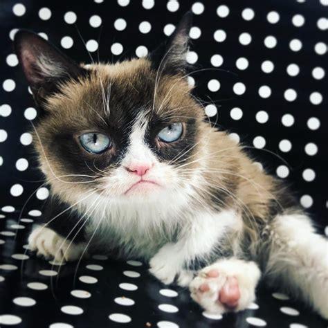 official grumpy cat home facebook