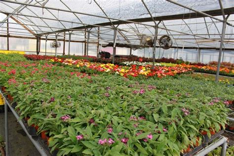 longview new orleans our location new orleans gardens nursery longview texas