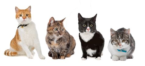 New Cat Health Network Partnership Launched To Improve