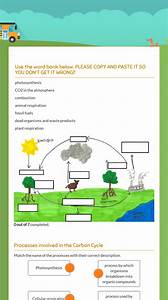 Carbon Cycle Quick Check