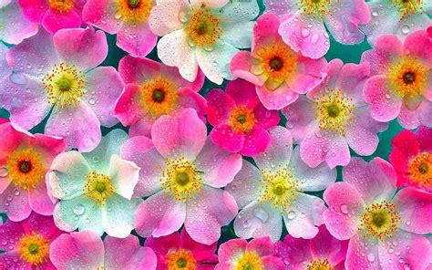 wallpaper bunga cantik