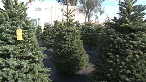 fir real christmas tree seller offers real tree