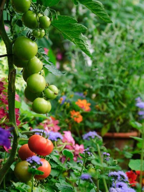 edible landscaping growing   food hgtv