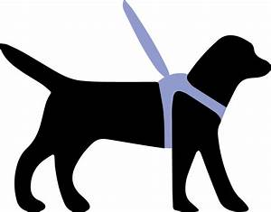 Harnesses Can Improve Health Of Guide Dogs