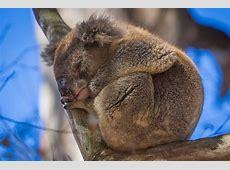 Kangaroo Island A Microcosm Of Australia PRETEND Be