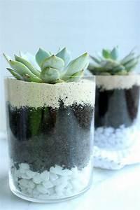 Sukkulenten Im Glas Pflanzen : zimmerpflanzen pflegeleicht sorgen sie f r ein gesundes raumklima plants pflanzen garten ~ Eleganceandgraceweddings.com Haus und Dekorationen