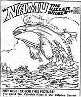 Whale Coloring Killer Orca Namu Drawing 1971 Contest Getdrawings sketch template