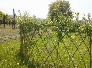 Zaun Aus Weide : update lebendiger zaun aus weiden garten garden ~ Watch28wear.com Haus und Dekorationen