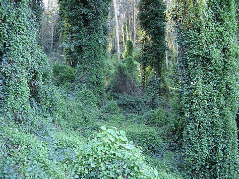 Non-native Invasive Species