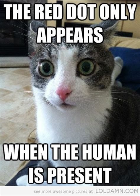 Cat Memes Hope You All Have A Great Weekend Who Let