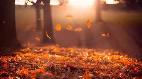 autumn p    hd wallpapers