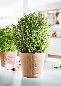 Pflanzen Für Innen : tipps f r salbei im kr utertopf f r die mediterrane k che ~ Michelbontemps.com Haus und Dekorationen