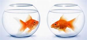 Bilder Im Glas : goldfische haltung im glas und einzelhaltung sind tabu ~ Orissabook.com Haus und Dekorationen
