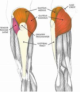 Muscles Of The Leg And Foot