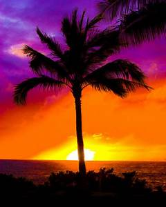 palm tree sunsets image search results