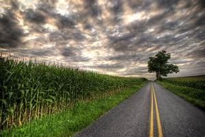 Field, Road, Tree, Landscape, Wallpapers, Hd, Desktop, And, Mobile, Backgrounds