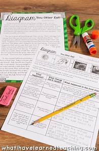Ecosystems And Biodiversity Third Grade Science Stations