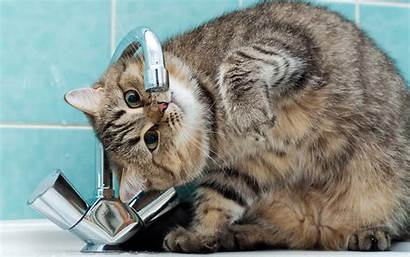 Cat Funny Cats Desktop Wallpapers Backgrounds Drink