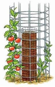 Gurken Pflanzen Anleitung : die besten 25 tomaten z chten ideen auf pinterest tomaten garten wie man pflanzen anbaut und ~ Whattoseeinmadrid.com Haus und Dekorationen