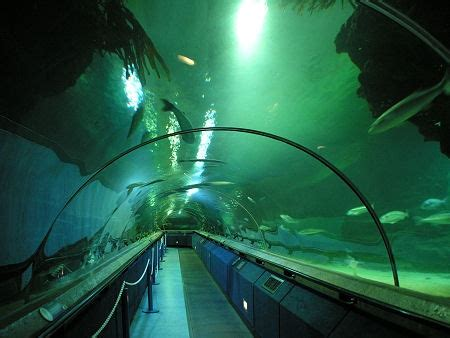 underwater tunnel  underwater tunnel  deep sea