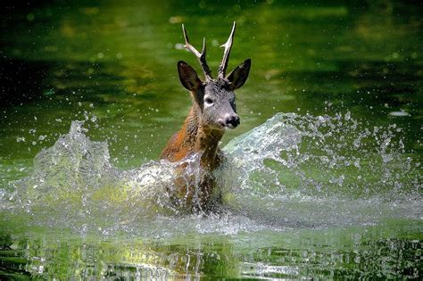 3d Animals Wallpapers Free - beautiful frog wallpaper for free beautiful deer