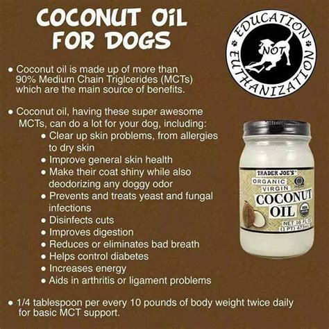 coconut oil  dogs boquete ning panama