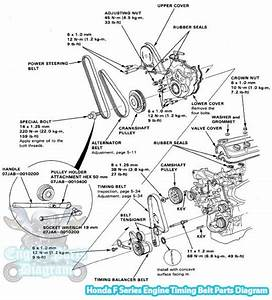 1991 Honda Accord Timing Belt Parts Diagram  F18a Engine