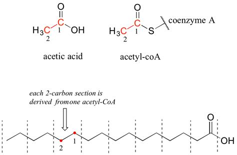 band structure chemistry libretexts introduction to lipid structure chemistry libretexts