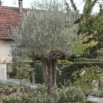 mediterrane pflanzen perfekt imitiert mein schoener garten