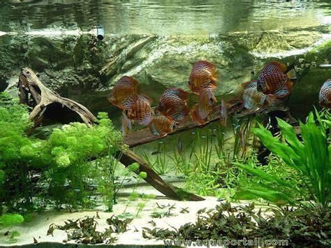 les guides pour aquariums les manuels d aquariophilie les articles aquariophiles