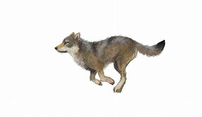 Animated Wolf Clipart Shared Clip Transparent Royalty