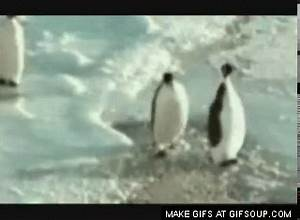 The gallery for --> Animated Dancing Penguin Gif