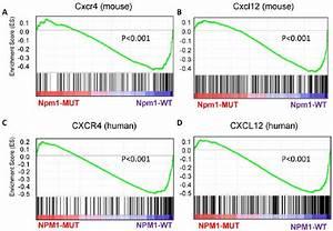 Enrichment plots from gene set enrichment analysis (GSEA ...