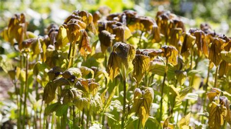 Frostschutz Für Pflanzen Im Frühjahr