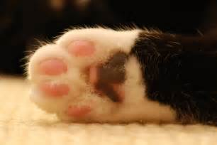 cat s paw file cat paw cloudzilla jpg wikimedia commons